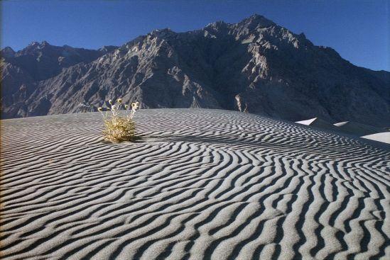 19 Silvery Grey Sand Dunes Near Skardu